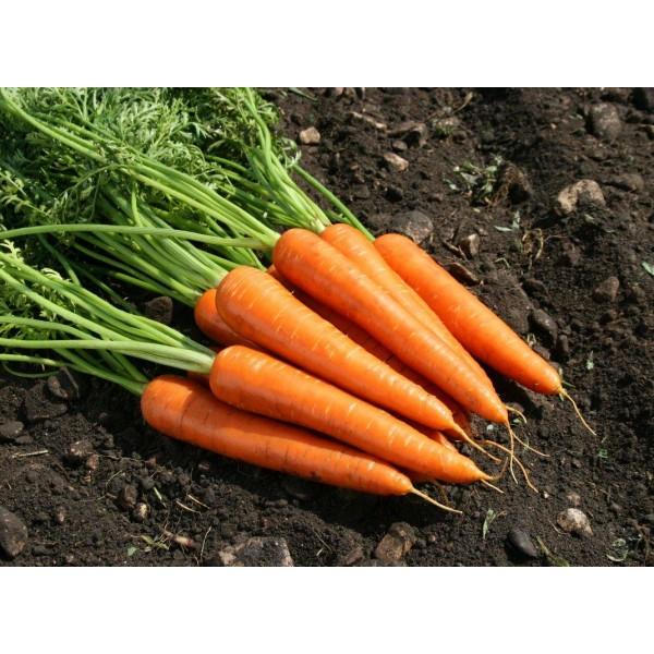 Huile essentielle carotte les vertus
