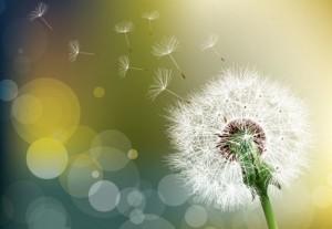 allergie fleur